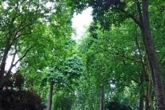 l_-_park_v_Bloomsberry