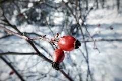 pankova-cervena-v-cernobilem-svete